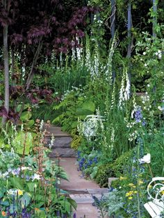 "English garden designers, such as Vita Sackville-West, Geoffrey Jellicoe, and Charles Wade; also, use plants such as river birch, White foxglove, Japanese forest grass, 'Sum and Substance' hosta, Shirley Blue speedwell, Duchesse de Nemours peony, Golden columbine, 'Royal Standard' hosta, Moonshine yarrow, Five-leaf akebia, ""Patricia"" geranium"