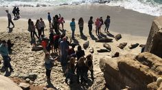 We are two young brothers who have a passion for wildlife, which is why we founded TERRA, and we need your help!   There are seals who are hauling out onto the sand beach just south of Point Mencinger inLa Jolla, California. Unfortunately, there are currently no signs in this area to inform beach-goers...