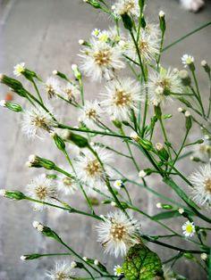 """Lavanda & Rose: Spontanietà  """"L' amore è un' erba spontanea, non una pianta da giardino"""""""