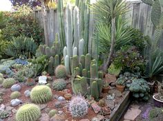Beautiful cactus garden with hardscape. Cactus and succulents enjoy tremendous popularity in the world of garden designs and even outside because their exotic and iconic images appear in pop cultur…