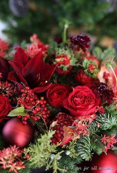 Christmas in Red Christmas Flower Arrangements, Christmas Flowers, Christmas Colors, Red Christmas, Christmas Time, Floral Arrangements, Fresh Flowers, Beautiful Flowers, Ivy Flower