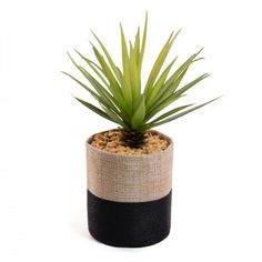 Plante succulente Zelena sword grass pot en tissu - KAVE HOME