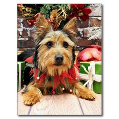 107 best christmas cards australia images on pinterest christmas christmas australian terrier leo postcard m4hsunfo