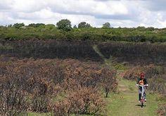 A bike ride from Princetown to Plymouth through Dartmoor and Yelverton, Devon, England, UK