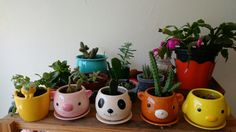 Apartament Garden, suculentas, cactus, cute vase