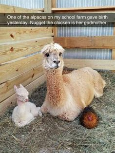 Nugget the chicken is her godmother.