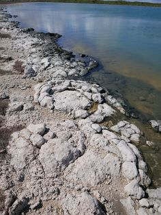 It was great to visit Lake Thetis, Cervantes, Australia to look at the Stromatolites and to walk around the lake. A magical place. Western Australia, Perth, River, Places, Outdoor, Beautiful, Outdoors, Outdoor Games, Outdoor Living