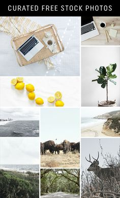 Look What I Found: Curated Free Stock Photos #stockphotos