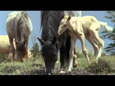 First steps.John Sokoloff.Twilight in The Canyon. - YouTube