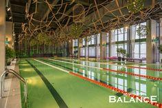 Оформление потолка бассейна Wellness&spa Balance. По индивидуальным размерам мы изготовили клетки, которые были покрашены в золотой цвет. Для озеленения были сплетены шары разного диаметра. Затем они были оплетены искусственными цветами и растениями. Декорирование искусственными растениями. Реализация студии Iren Lakusta