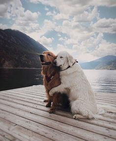 """60.8k Likes, 2,400 Comments - Country Living (@countrylivingmag) on Instagram: """"Tag your best friend to give them a virtual hug!  #dogsofinstagram #dailyfluff #instapet #regram…"""""""