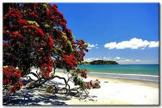Waiheke Island, New Zealand - one of my favourite places in the world