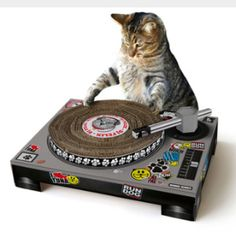 I don't even have a cat, but this is the coolest scratchy thing I've ever seen...