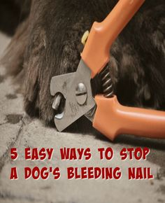 How To Make A Dog S Nail Stop Bleeding