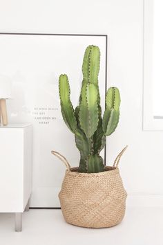 Harmony and design: TIPS DECO #O7: CACTUS XL