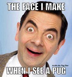 Yay, pugs!!                                                                                                                                                                                 More