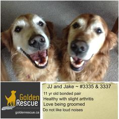 We Love Each Other, Foster Family, Adoption Process, Left Alone, Love People, Told You So, Golden Retrievers, Website, Board
