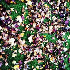 The leaves paint the ground beautiful!