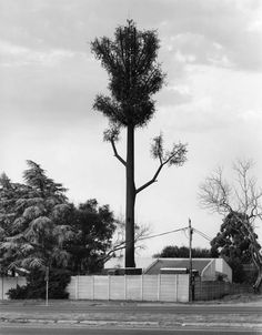 Mobile phone poles disguised as trees