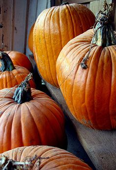 Pumpkins | Flickr - Photo Sharing!