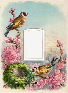 Cathe-Holden-Bird-Album-03