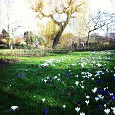 Spring is magic @Regent's park