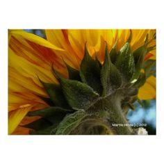 Sunflower Underside | Photography by Martie Hevia http://www.zazzle.com/mhevia*/