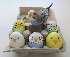 Ideas for pet bird parakeet sweets Funny Birds, Cute Birds, Pretty Birds, Beautiful Birds, Beautiful Pictures, Egg Crafts, Easter Crafts, Puffins Bird, Crazy Bird