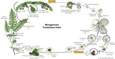 Image result for metagenesis