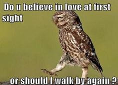 Do u believe in love at first sight or should I walk by again?    #funnypictures, #funnypictures, #funnylove, #funnypickuplines, #funnybirds - Visit http://funny-lover.com for more fun.