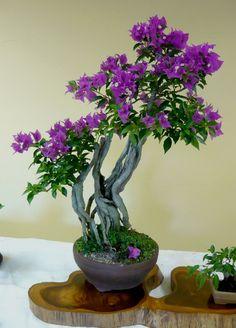 ☼●How do you like this pretty tree?☼● #BonsaiInspiration