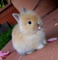 Konijn bunny