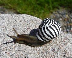 ALLPE Medio Ambiente Blog Medioambiente.org : Pintar coloridos caracoles para evitar pisarlos