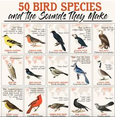 An infographic celebrating 50 bird species and the sounds they make. Read about why birds sing and learn how you can help birds. Bird Facts, Bird Identification, How To Attract Birds, Identify Birds, Mourning Dove, Migratory Birds, Bird Species, Animal Species, Animals
