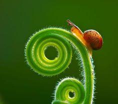 #snail  #green  #spiral