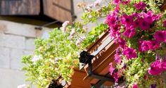 Decorar un balcón con surfinias y geranios