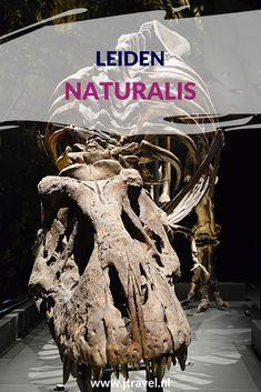 In Leiden bezocht ik Naturalis. In Naturalis beleef je de wonderlijke wereld die natuur heet. Ga op ontdekkingstocht in zeven tentoonstellingszalen vol met het mooiste uit de natuur en ga op zoek naar T. rex Trix. Hier lees je meer over Naturalis in Leiden. Lees je mee? #naturalis #naturalisleiden #leiden #museum #museumkaart #jtravel #jtravelblog