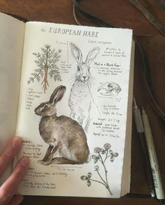 This is beyond fabulous. I absolutely love this natural history illustration of The European Hare. via This is beyond fabulous. I absolutely love this natural history illustration of The European Hare. Sketch Journal, Journal Pages, Journal Ideas, Drawing Journal, Journal Art, Diet Journal, Notebook Sketches, Artist Journal, Art Et Illustration