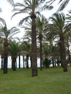 La Carihuela, #Torremolinos (Málaga)