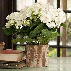 Hydrangea decoration for wedding