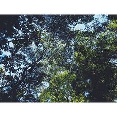 【pocona.ok】さんのInstagramをピンしています。 《. 森🌳 . #山#自然#癒し#木 #森#綺麗#空#sky #一眼レフ#ミラーレス #オリンパス#カメラ #photo #写真好き  #カメラ女子 #写真#自然好き #晴れ#日本#japan》