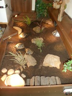 indoor tortoise enclosure - Google Search