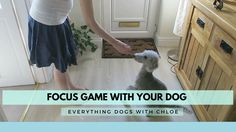 FOCUS GAMES FOR DOGS