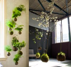 Inspired, obsessed, utterly distracted by these kokedama -japanese string gardens. Via Oh, Albatross.