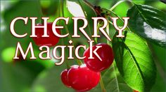 Cherry fruit is also associated with youthfulness and immortality.  The Japanese Goddess Xi-Wang Mu had a garden full of cherries of immortality, which ripened every 1000 years.  -- Cherry Magical Properties and Uses