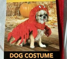 Dog Costume Lobster / Crawfish Size L New w/ Tag Belly & Neck Velcro Mardi Gras