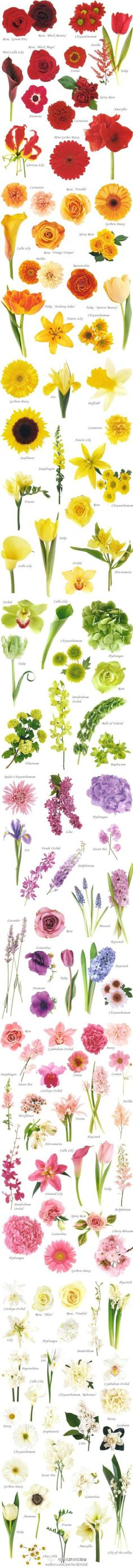 This is a fantastic (and comprehensive) guide of different kinds of wedding flowers, complete with color photos and names.  Very helpful!