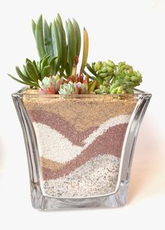 15 of the Best Succulent Arrangements Ever Succulent planter ideas cactus.gonna make something like this but with colored sand with the kids! Succulents In Containers, Cacti And Succulents, Planting Succulents, Cactus Plants, Planting Flowers, Cactus Flower, Suculentas Diy, Cactus Y Suculentas, Succulent Centerpieces
