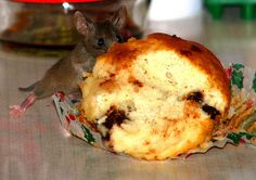 edited mouse 6 | ...the same brave mouse eating a muffin on … | Flickr