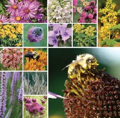 64 Plant Xerces Pollinator Garden (Well-Drained Soil in Full Sun)